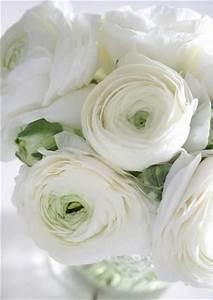 Bouquet Fleurs Blanches : bouquet de fleurs blanches et roses fleurs blanches ~ Premium-room.com Idées de Décoration