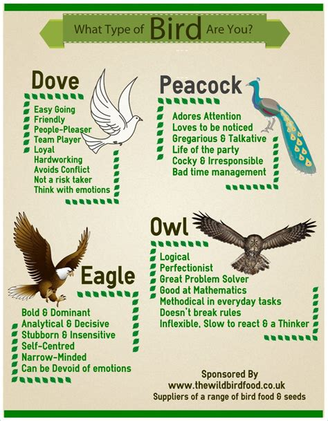 What Type Of Bird Are You? Cool Daily Infographics