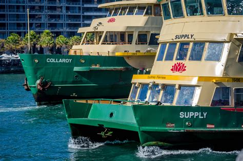 Catamaran Boat Share Sydney by File Sydney Ferry Supply And Collaroy Jpg Wikimedia Commons