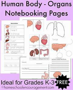 Free Human Body - Organs Notebooking Pages