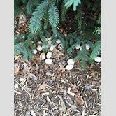duck-egg-nest