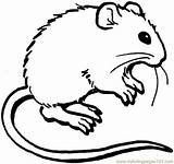 Mouse Coloring Pages Coloringpages101 sketch template