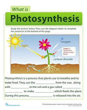 photosynthesis  kids worksheet educationcom