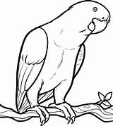Parrot Coloring Looking sketch template