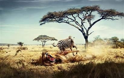 Africa Desktop Wallpapers Mobile Golden Highlands Gate