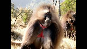 Top 10 Most Funny Monkeys In The World