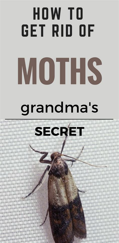 rid  moths grandmas secret
