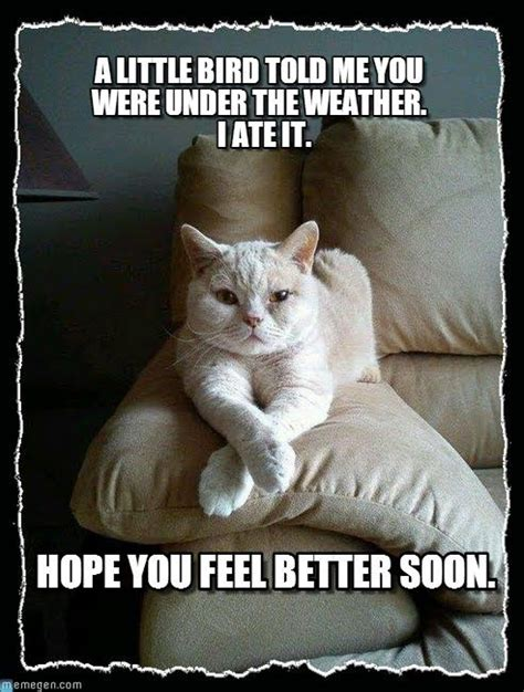 Cat Soon Meme - get well soon cat meme extravital fasion happy birthday etc board pinterest meme and cat