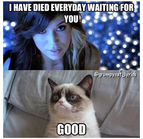 Mere Cat Meme - pin af ida lose p 229 meme pinterest