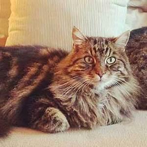 Katze Im Haus Halten : die 5 phasen der katzenzusammenf hrung tierisch wohnen ~ Lizthompson.info Haus und Dekorationen