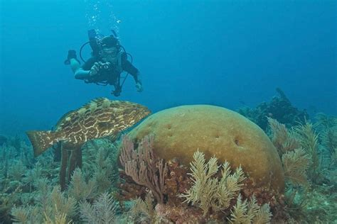 florida keys  top american scuba diving destinations