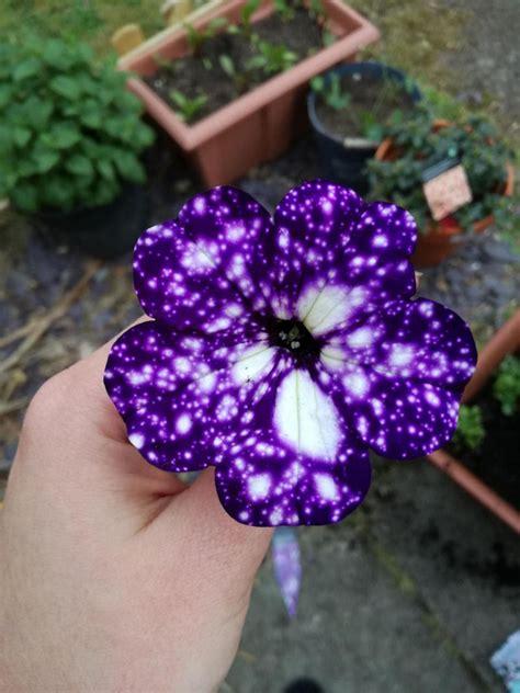 flores espetaculares parecem ter  universo estampado em