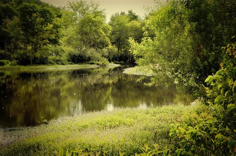 river, Trees, Landscape Wallpapers HD / Desktop and Mobile ...