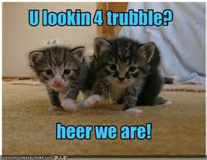 all about cats all about cats cats photo 17154280 fanpop
