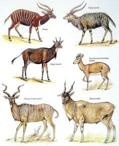 A List of African Antelope Species With Awesome Facts and