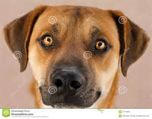 Black Tan Dog with Face