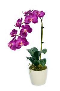 bien entretenir orchid 233 e photo de fleur une pensee