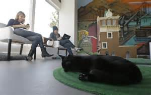 cat cafe portland californians pile into cat town cafe where 10 earns one