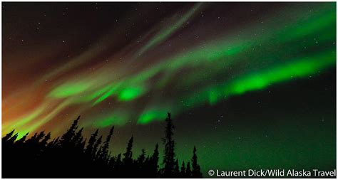 alaska northern lights tour wild alaska travel northern lights tour archives wild