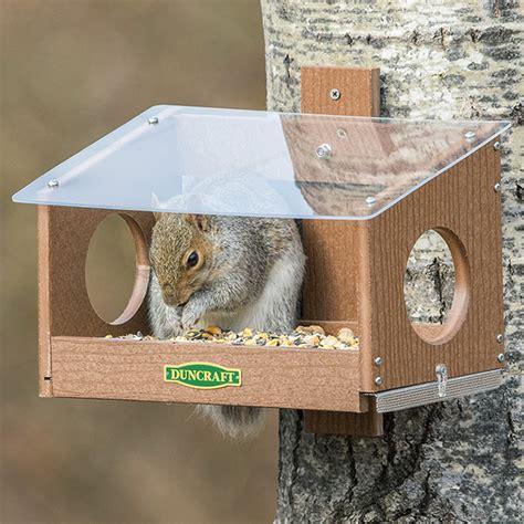 duncraftcom squirrel scramble feeder