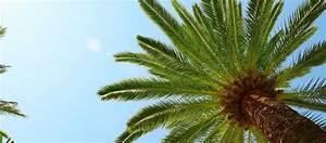 palmen gt garten ratgeber With französischer balkon mit garten palme winterfest