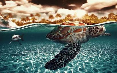 Turtle Wallpapers Awesome Desktop Background Sea Ocean