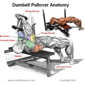 gallery for gt dumbbell pullover muscles worked