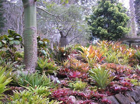 bromeliads australia nursery bromeliad garden tamborine mountain botanic gardens