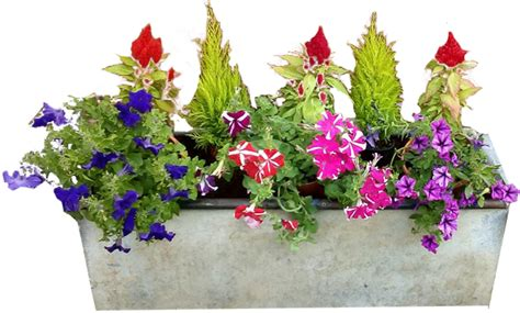 square concrete planter concrete planter flowers no background png image