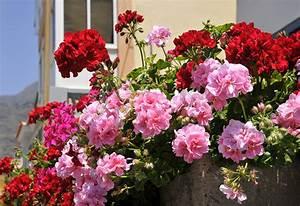 say hello to beth samora hudson heinen39s floral manager With katzennetz balkon mit gucci flora garden