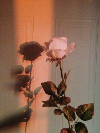 gambar aesthetic bunga layu