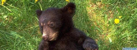 grizzly bear cub facebook cover timeline photo banner  fb