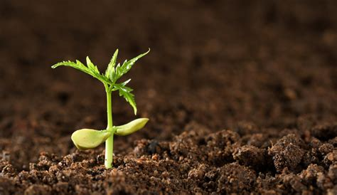 growing plants quot living quot systematic reviews are they the future students 4 best evidence
