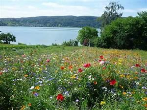Alternative Zu Gras Garten : blumenwiese statt rasen bl tenreichtum und farbenvielfalt ~ Markanthonyermac.com Haus und Dekorationen
