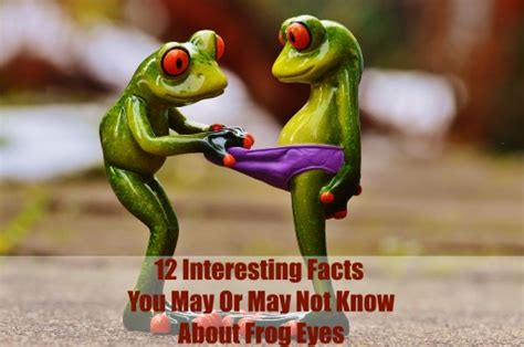 12 Interesting Facts About Frog Eyes