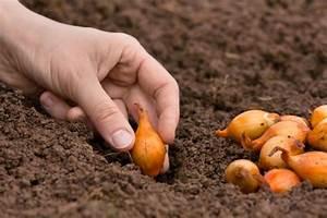 Quand Planter Des Dahlias : planter les oignons gamm vert ~ Nature-et-papiers.com Idées de Décoration
