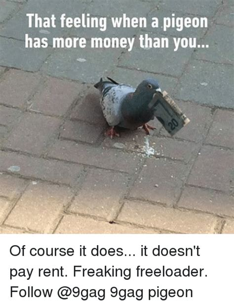 Pigeon Memes - that feeling when a pigeon has more money than you of course it does it doesn t pay rent