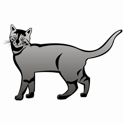 Cat Vector Clipart Sketch Katze Golden Cartoon
