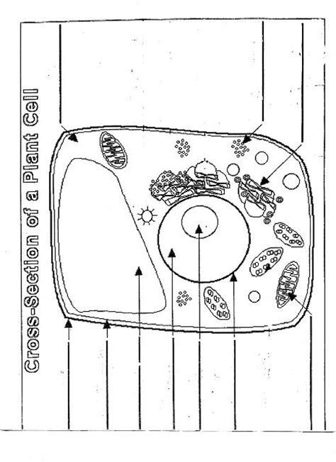 12 Best Images Of Animal Cell Labeling Worksheet  Label Animal Cell Diagram, Blank Animal Cell