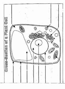 12 Best Images Of Animal Cell Labeling Worksheet