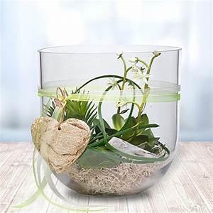 Blumenzwiebeln Im Glas : glas voll mit gr nen pflanzen tischdeko pinterest glas pflanzen und aktuelle news ~ Markanthonyermac.com Haus und Dekorationen