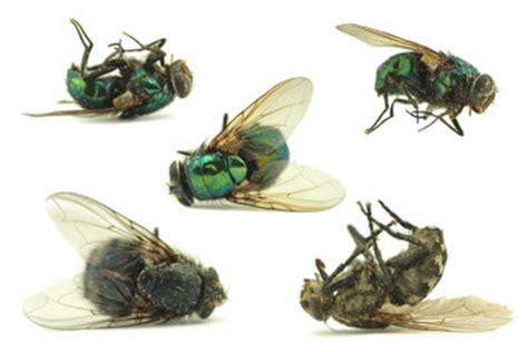 Gegen Fliegen by Was Hilft Gegen Fliegen In Der Wohnung