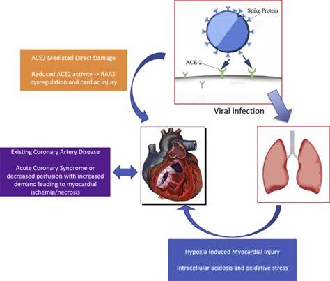 cardiovascular burden  coronavirus disease