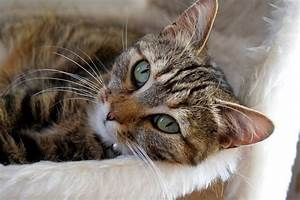 Kidney Disease In Older Cats