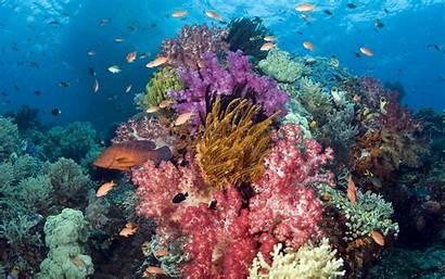 Sea Underwater Coral Fish Background Wallpapers Desktop