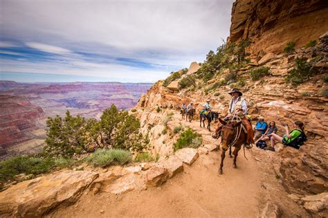 canyon grand riding mule horses ride rides horseback trail tourists places tours adult arizona resorts forever travel