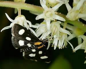 Pennsylvania Butterfly Identification