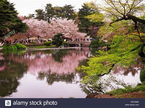 shinjuku gyoen national garden cherry blossom reflecting in a lake at shinjuku gyoen