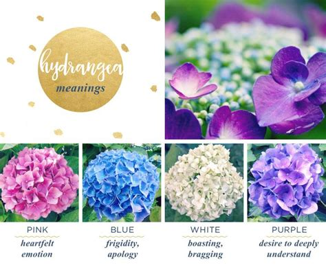 flower color meanings hydrangea meaning and symbolism ideas for the house