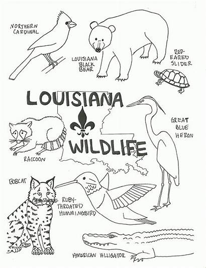 Louisiana Coloring Pages Wildlife Animals Swamp State